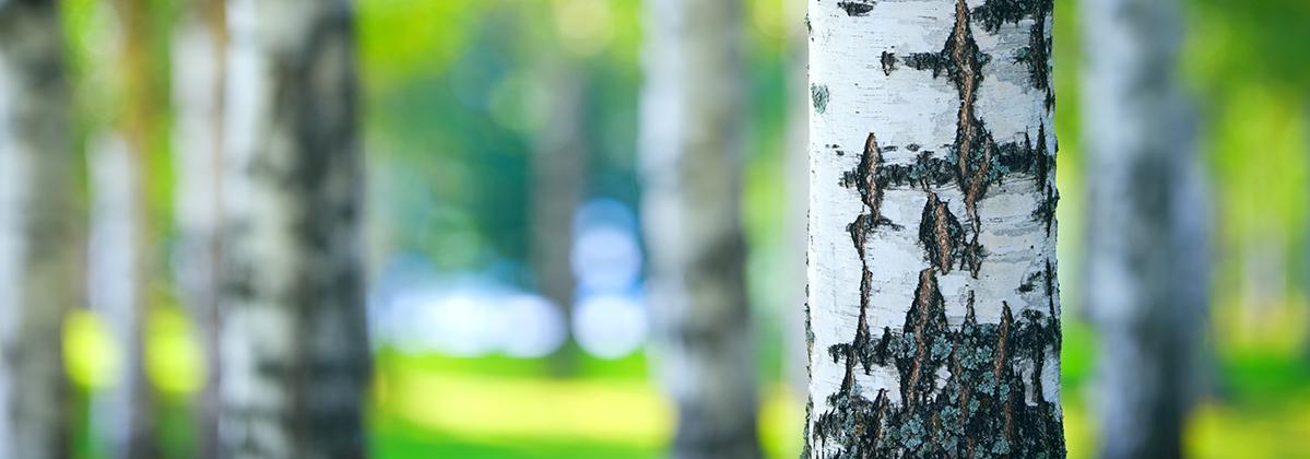 Bæredygtige produkter viegand maagøe grøn omstilling