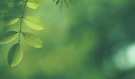 Klimakommune Hørsholdm Case-top