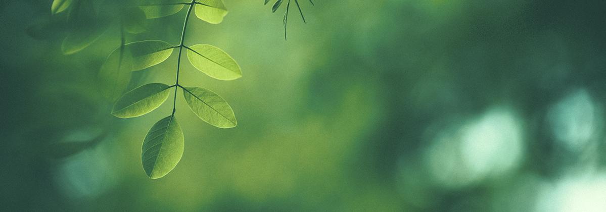 Klimakommune Hørsholdm Case-top co2-regnskab